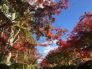 高野山を一通り回って秋を散策し、あれこれ写真を撮ってきました