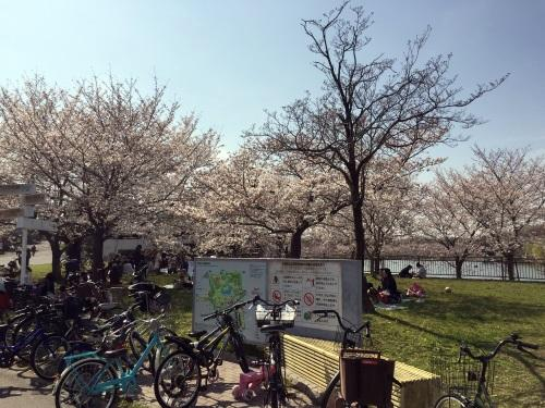 2018年鶴見緑地公園の桜その2