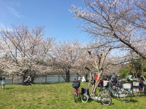 2018年鶴見緑地公園の桜その3