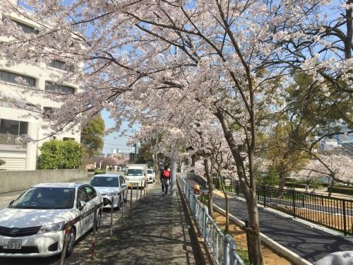 2018年天満橋駅周辺の桜その2